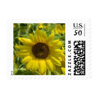 Gold Sunflower Postage Stamp