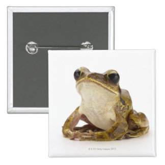 Gold tree frog 2 inch square button
