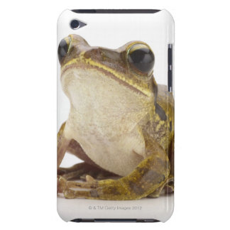 Gold tree frog iPod touch case