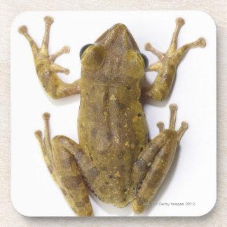 Gold tree frog coaster