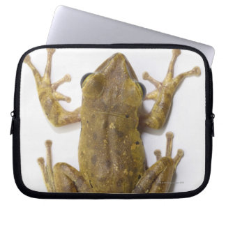 Gold tree frog computer sleeve