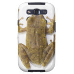 Gold tree frog galaxy SIII covers