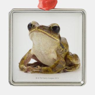 Gold tree frog metal ornament