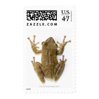 Gold tree frog postage