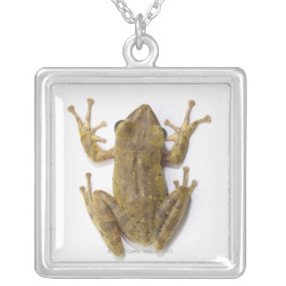 Gold tree frog silver plated necklace