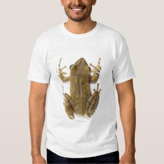 Gold tree frog t shirt