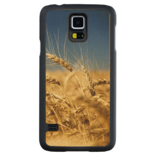 Gold wheat and blue sky with sun carved maple galaxy s5 case
