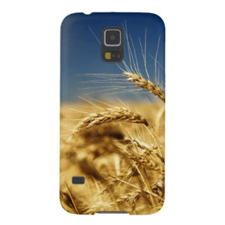 Gold wheat and blue sky with sun case for galaxy s5