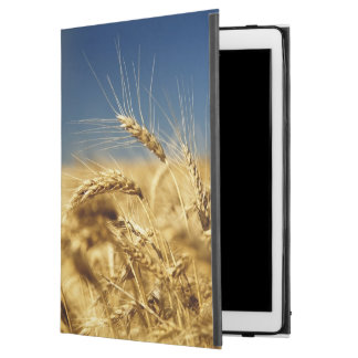 Gold wheat and blue sky with sun iPad pro case