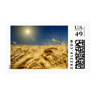 Gold wheat and blue sky with sun postage stamp