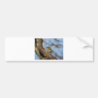 Goldcrest Bumper Sticker