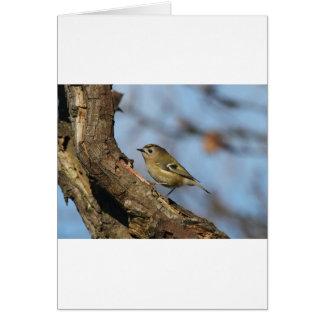 Goldcrest Card
