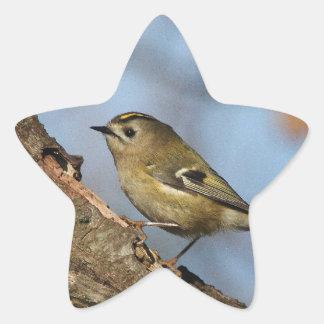 Goldcrest Star Sticker