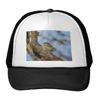 Goldcrest Trucker Hat
