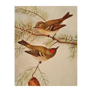 Golden and Ruby Crowned Kinglets Wood Print