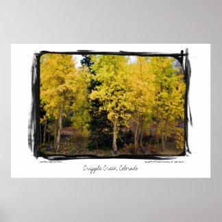 Golden Aspen, Cripple Creek, Colorado Poster