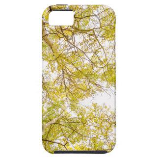 Golden Aspen Forest Canopy iPhone SE/5/5s Case