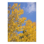 Golden Aspen in Autumn 5x7 Paper Invitation Card