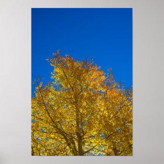 Golden Aspen in the Sky Poster