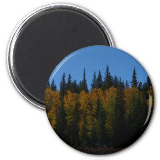 Golden Aspen Magnet