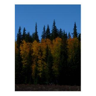 Golden Aspen Postcard