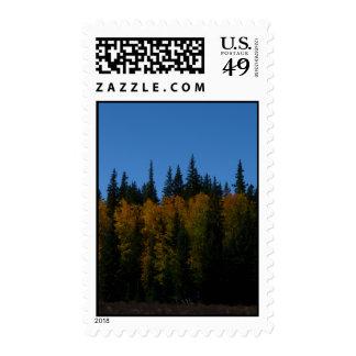 Golden Aspen Stamps