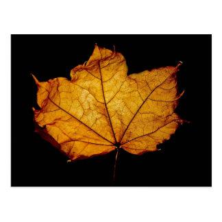 Golden Autumn Leaf Postcard