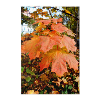 Golden Autumn Leaves Acrylic Print