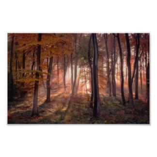 Golden Autumn Light Photographic Print