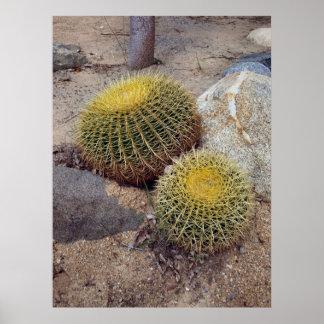 Golden Barrel Cacti Poster