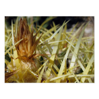 Golden Barrel Cactus Flower, print