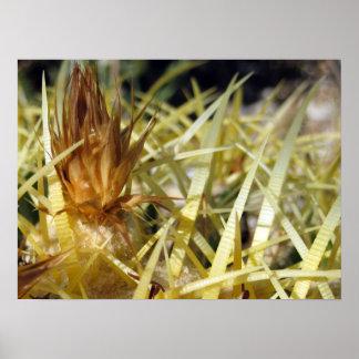 Golden Barrel Cactus Flower, print
