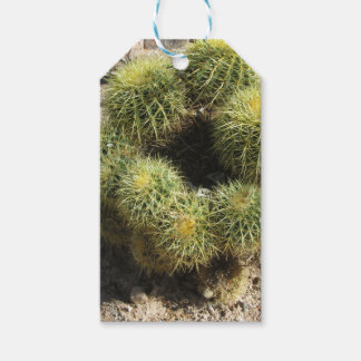 Golden Barrel Cactus Gift Tags