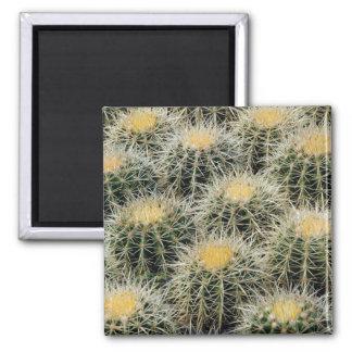 Golden Barrel Cactus - Magnet
