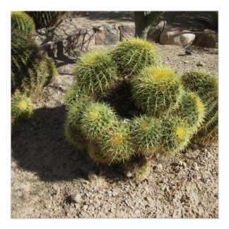 Golden Barrel Cactus Poster