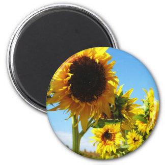 Golden Beauties Sunflowers Magnet