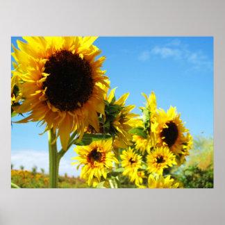 Golden Beauties Sunflowers Print