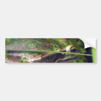 Golden Bell Frog Bumper Sticker