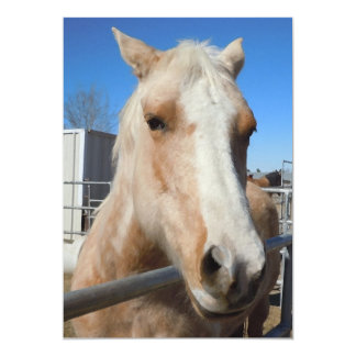 Golden Blond Palomino Pony - Horse Lover Card