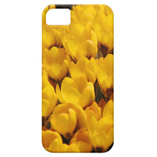 Golden Bloom Delight iPhone SE/5/5s Case