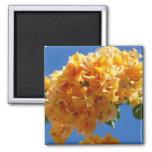 Golden Bougainvillea Magnet