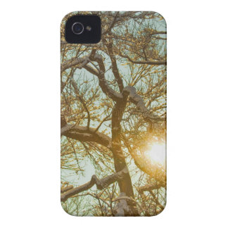 Golden Branches In The Snow iPhone 4 Covers