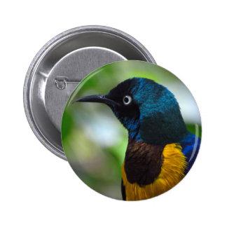 Golden-breasted Starling bird Button