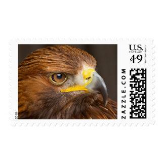 Golden Brown Eagle Stamps