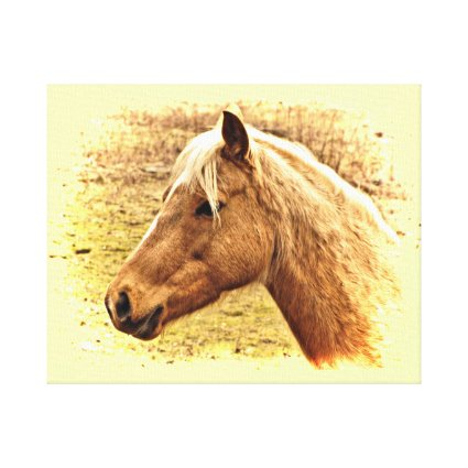 Golden Brown Horse in Sun Animal Canvas Print