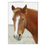 Golden Brown Horse On Thank You Blank Card Greeting Card