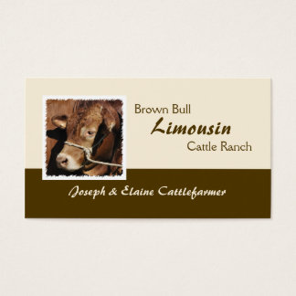 Golden brown Limousin bull photo Business Card