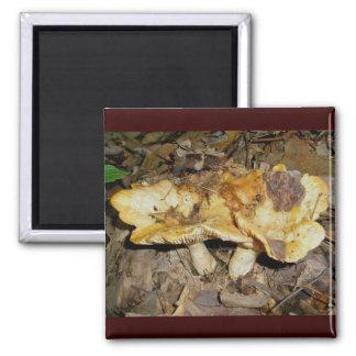 Golden Brown Mushrooms Magnet