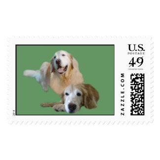 Golden Buddies Postage Stamp