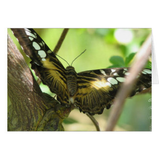 Golden Butterfly Greeting Card